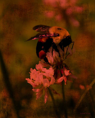Photograph - Bumble Bee Serenade Nbr 2 by Lesa Fine