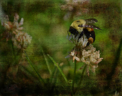 Photograph - Bumble Bee Serenade Nbr 3 by Lesa Fine