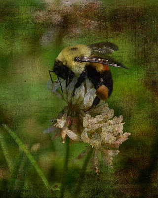 Photograph - Bumble Bee Serenade Nbr 3 Macro by Lesa Fine