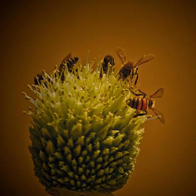 Designer Photograph - Bumble Bee Stalk by Renee Barnes