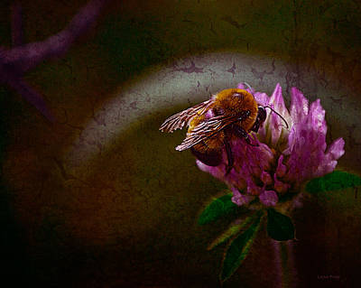 Photograph - Bumble Bee Tattered Wings Art 3 by Lesa Fine