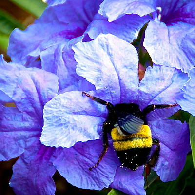 Photograph - Bumblebee Brunch by Dee Dee  Whittle