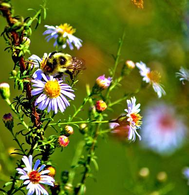 Photograph - Bumblebee Delight by Tyson Kinnison