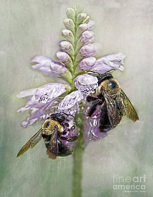 Photograph - Bumblebee Dinner Date by Barbara McMahon