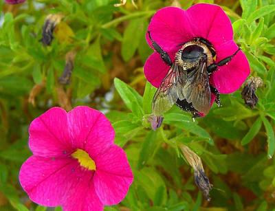 Bumblebee Hug Art Print