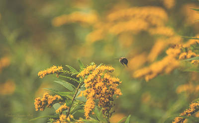 Photograph - Bumblebee In Flight by Darlene Bell