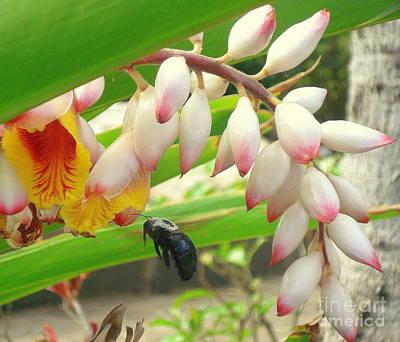 Photograph - Bumblebee In Flight by Rachel Munoz Striggow