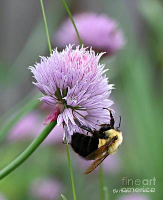 Photograph - Bumblebee On Clover by Barbara McMahon
