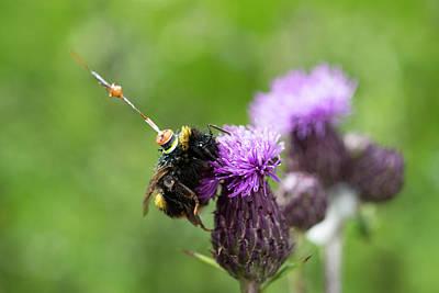 Bumblebee Radar Tagging Art Print