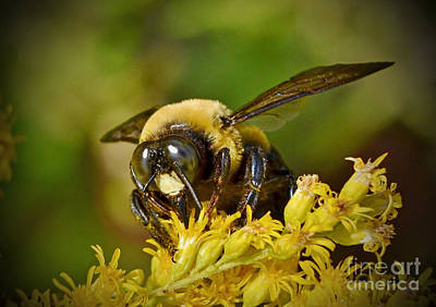 Photograph - Bumbling Bee by Kathy Baccari