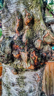 Funny Tree Shapes Photograph - Bumpy Fir Tree by Melissa Coffield
