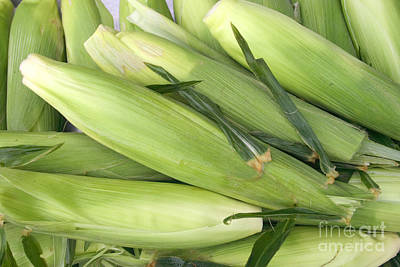 Sweet Corn Farm Photograph - Bunch Of Corn In Husk by James BO  Insogna