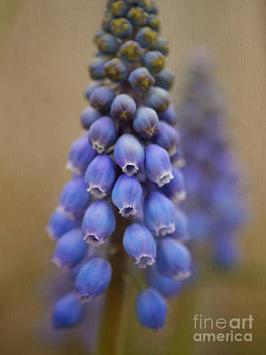 Blue Grapes Photograph - Bunch Of Grapes by Irina Wardas