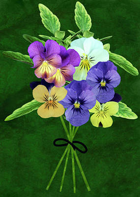 Cut Flowers Photograph - Bunch Of Pansies (viola Sp.) by Archie Young