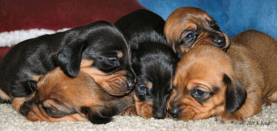 Dachshund Puppy Digital Art - Bunch Of Puppies by Anthony Kougl
