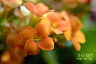 Bunch Of Small Orange Flowers Print by Sami Sarkis