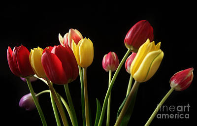 Different Colours Photograph - Bunch Of Tulips by Eden Baed