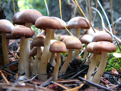Photograph - Bunches Of Mushrooms by Teresa Cox