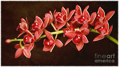 Photograph - Bunches Of Orchids by Elizabeth Winter