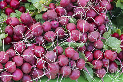 Photograph - Bunches Of Radishes by Diane Macdonald