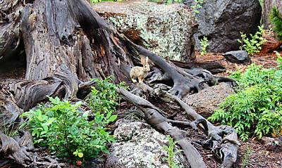 Photograph - Bunny by Kume Bryant