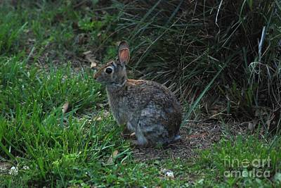 Photograph - Bunny by Mark McReynolds