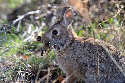 Photograph - Bunny Nesting by Rae Ann  M Garrett