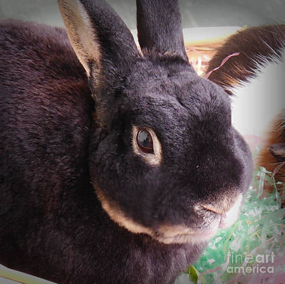 Photograph - Bunny Portrait by Valerie Reeves