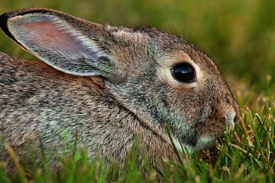 Bunny Profile Art Print by Mike Flynn