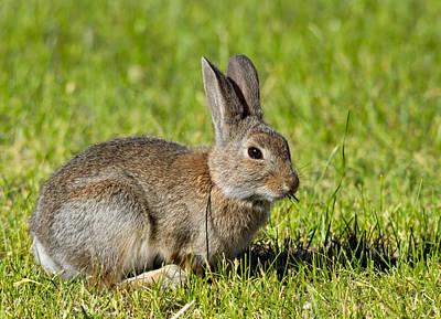 Kathleen Photograph - Bunny Rabbit by Kathleen Bishop