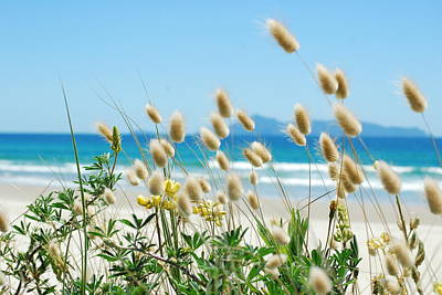 Photograph - Bunnytails Sea Grass by Jocelyn Friis