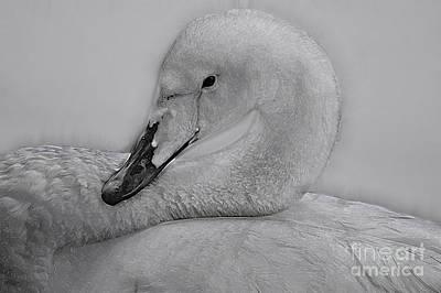 Bath Time - Birds 8a by Ben Yassa