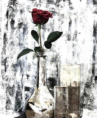 Histogram Photograph - Burgundy Beauty Rose by Marsha Heiken