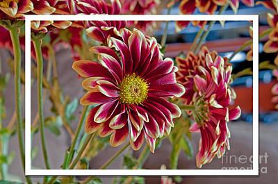 Photograph - Burgundy Dahlia Floral  by Valerie Garner