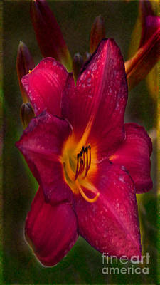 Photograph - Burgundy Day Lily Garden Art By Omaste Witkowski by Omaste Witkowski