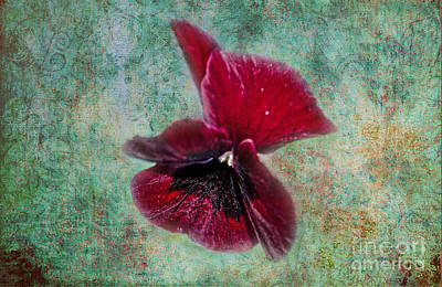 Photograph - Burgundy Pansy  by Donna Brown