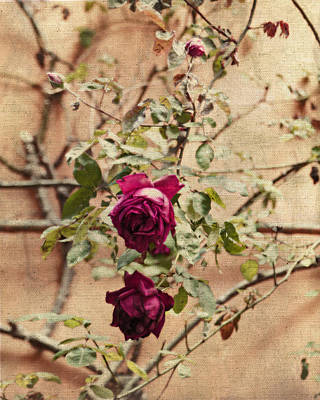Magenta Photograph - Burgundy Roses On Beige by Brooke T Ryan