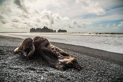 Olympic National Park Photograph - Buried by Kristopher Schoenleber