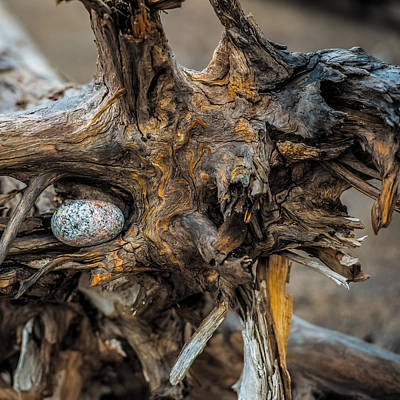 Duluth Photograph - Burl And Stone by Paul Freidlund