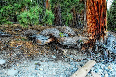Tree Roots Photograph - Burly by Donna Blackhall