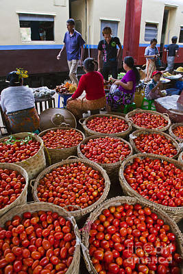 Photograph - Burmese Tomatoes by Craig Lovell