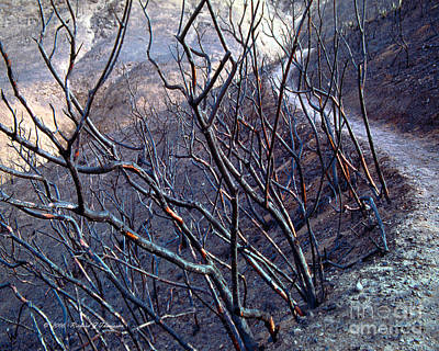 Photograph - Burned Hiking Trail by Richard J Thompson