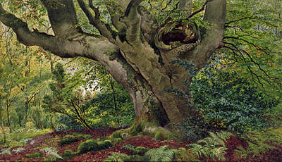 Burnham Beeches Art Print by James Matthews