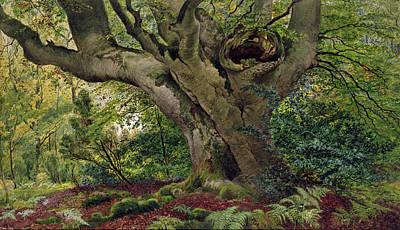Burnham Beeches Art Print by James Matthews