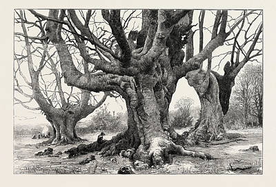 Burnham Beeches-recently Purchased By The Corporation Art Print by English School