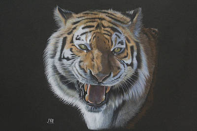 Endangered Drawing - Burning Bright - Siberian Tiger by Jill Parry