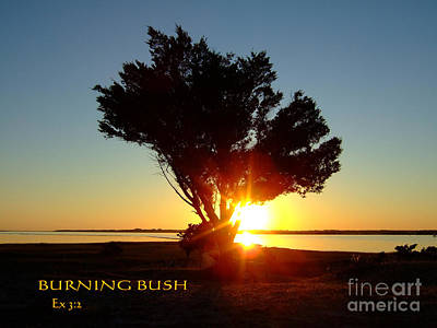 Photograph - Burning Bush by Bob Sample