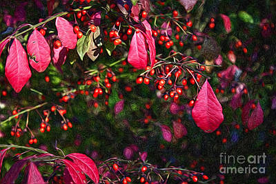 Photograph - Burning Bush by Lena Auxier