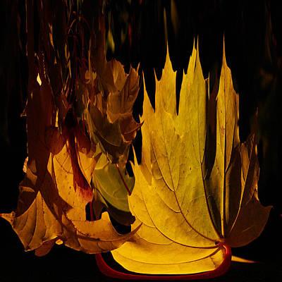 Jouko Lehto Rights Managed Images - Burning Fall Royalty-Free Image by Jouko Lehto
