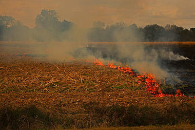 Photograph - Burning Louisiana Sugar Cane In The Field by Ronald Olivier